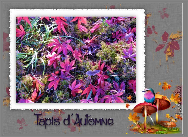 L'automne dans le jardin