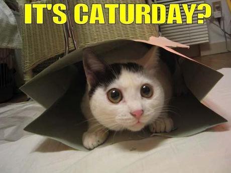 *Cat Day*