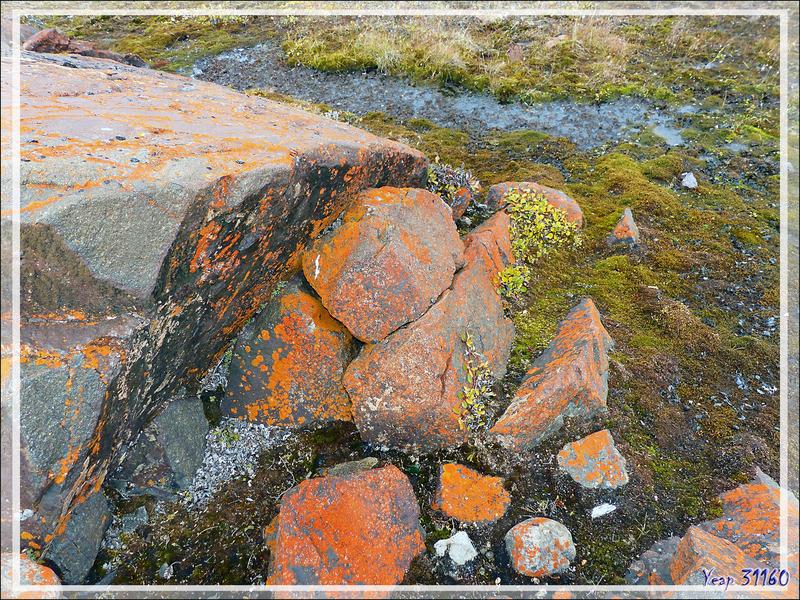 L'orange pousse bien sous ces latitudes ;-)) - Fort Ross - Somerset Island - Nunavut - Canada