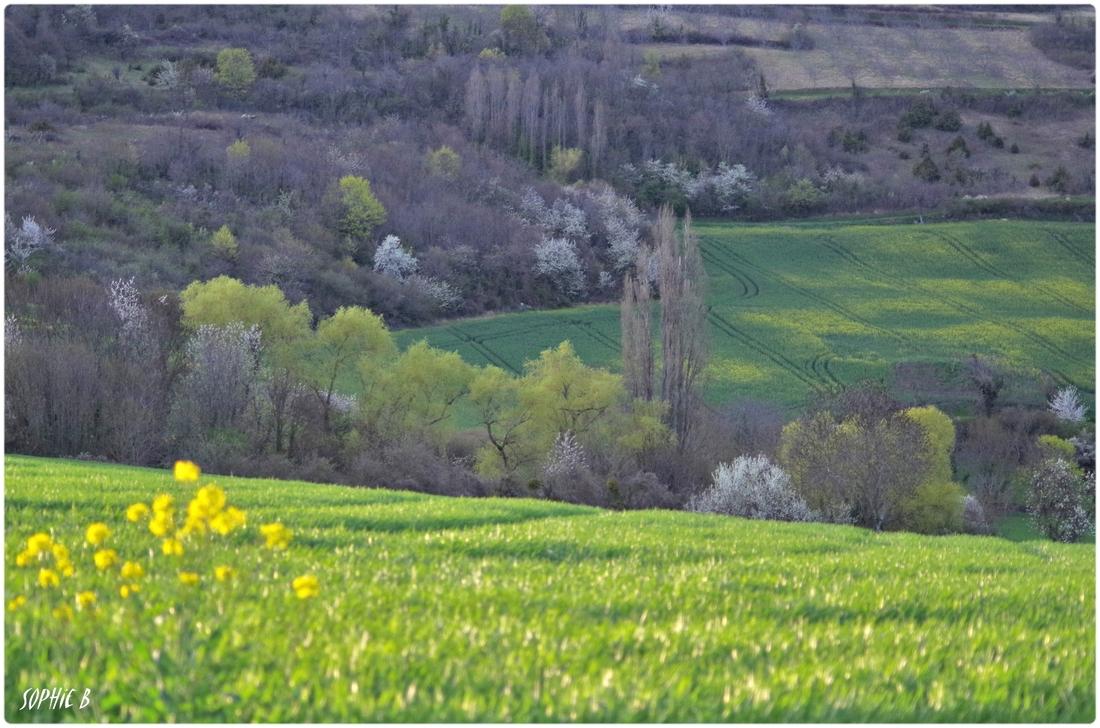 Dans les champs en avril .