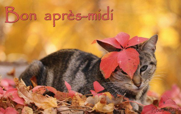 Mes choix ! | Bon après midi, Animaux d'automne, Animales