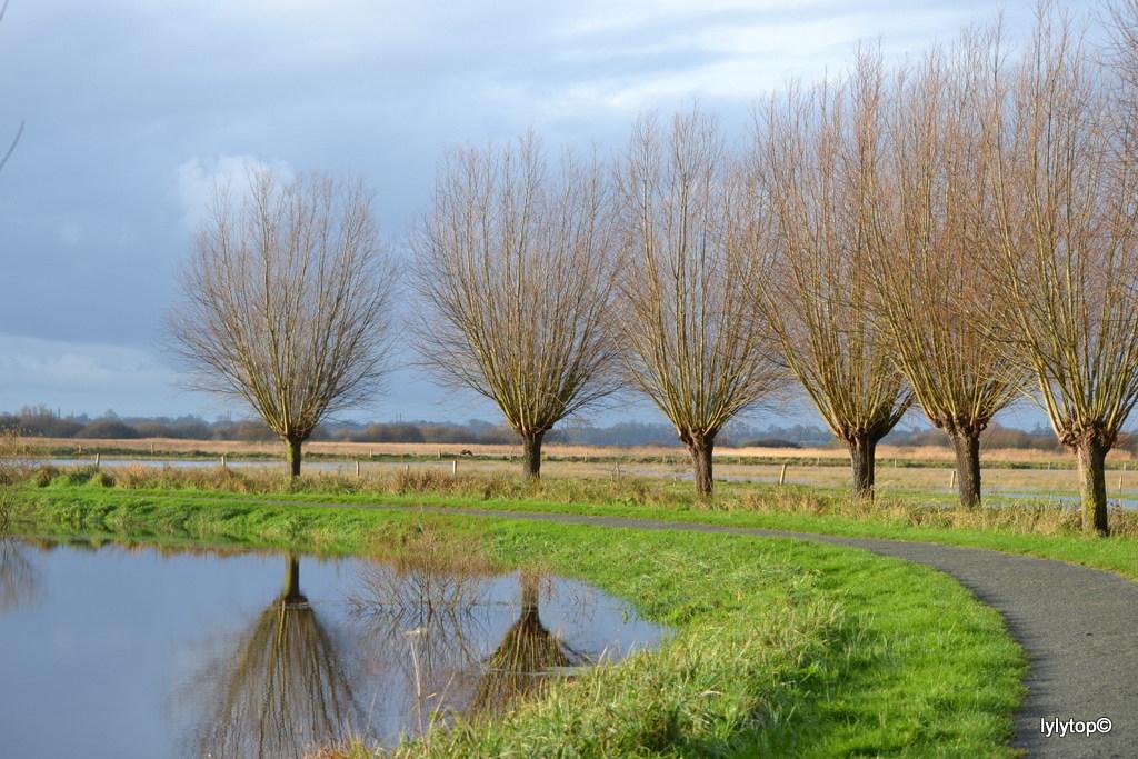 Le marais de Carentan (2)
