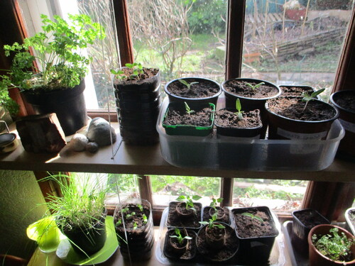 Comment réaliser ses propres semis?
