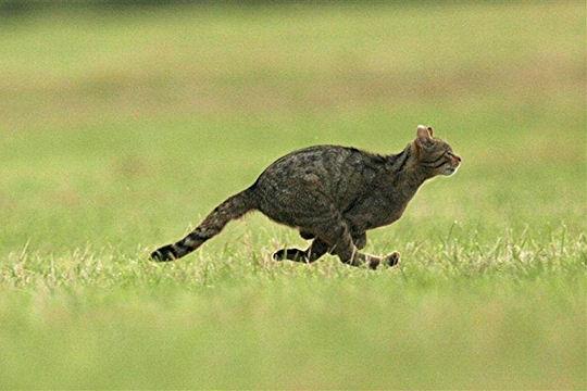 Si chat vous dit blog du prasmel - Combien de portee par an pour un chat ...