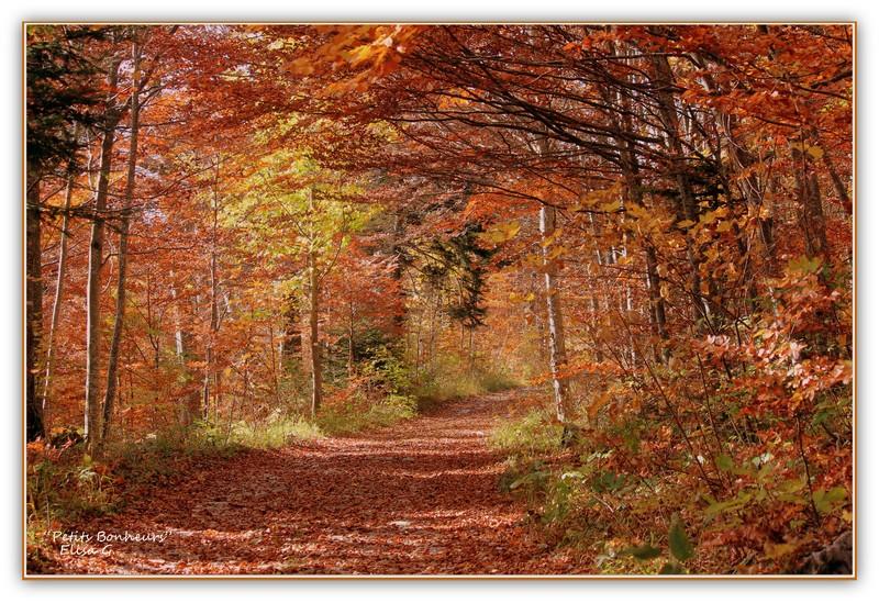 L 39 automne et ses couleurs petits bonheurs - L automne et ses couleurs ...