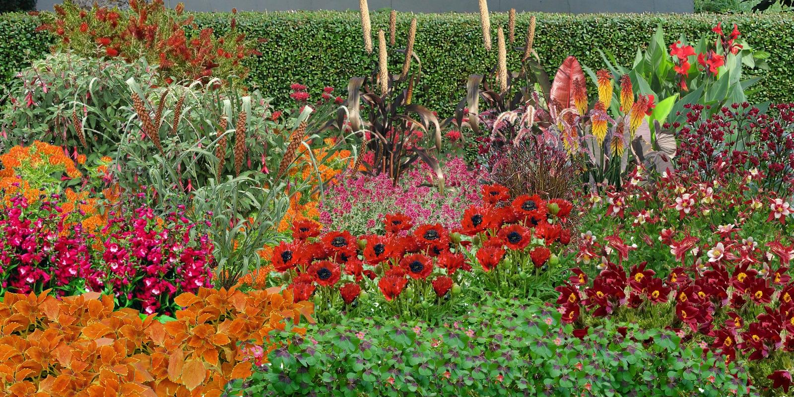 Fleurir son jardin jardinnature - Parterre de fleurs vivaces ...