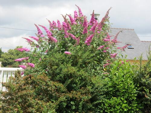 mes fleurs de mon jardin