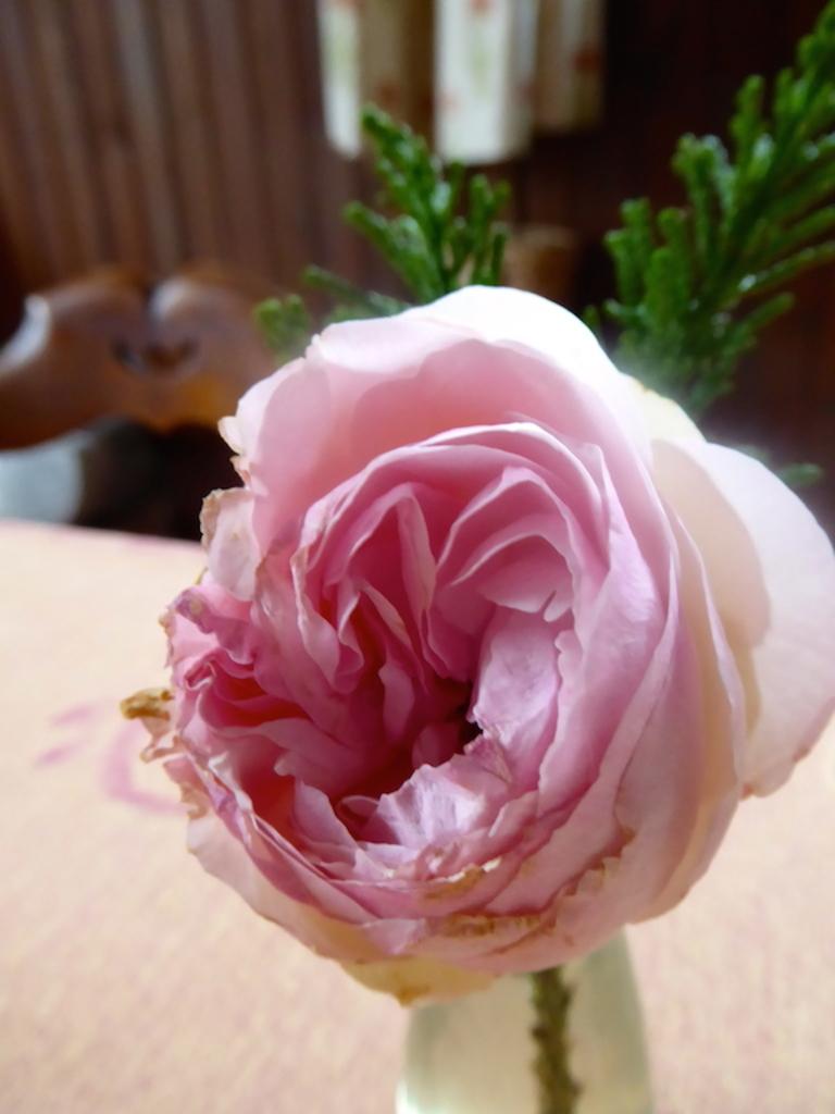Des fleurs à offrir pour la Saint Valentin.