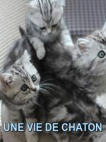 """Une vie de chaton : Ce film documentaire nous fait découvrir la première année de vie de 8 matous nés dans des environnements différents. Véritables phénomènes internet depuis quelques années, avec les LOLCATS, les chats fascinaient déjà les Égyptiens à l'époque antique... Alors que dire des chatons, adorables petites boules de poils qui font """"chat-virer"""" les c?urs... De leur naissance à leur premier anniversaire, en passant par leurs premiers pas ou leur départ vers leur nouvelle famille, des chatons de trois portées différentes, de salon, sauvages ou de ferme, invitent à découvrir le monde à travers leurs yeux. Après à peine quelques semaines de vie, il est temps pour eux de rejoindre leur foyer définitif, et d'y prendre leurs marques. Si certains sont accompagnés de leurs frères et soeurs, d'autres, à l'instar de Sassy, qui a grandi dans un refuge, doivent s'habituer au contact humain et à la présence d'autres animaux, comme des chiens. Comment vont-ils s'acclimater à leur nouvel environnement ? Leur premier anniversaire marque leur passage de l'enfance à l'âge adulte. Un cap, qui les voit devenir de vrais chats, dotés de tous les comportements inhérents à leur espèce. ... ----- ...  Chaine TV : France 5 Date de diffusion : 19/07/2017 Réalisé par : Jackie Garbutt, Daniel Wan Nationalité : Britannique Durée : 1h 22min Langue : Français"""