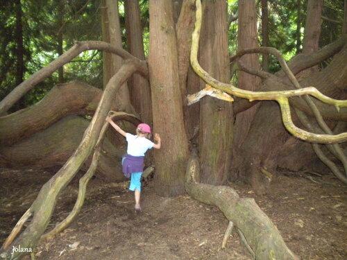 Tour arbre parc
