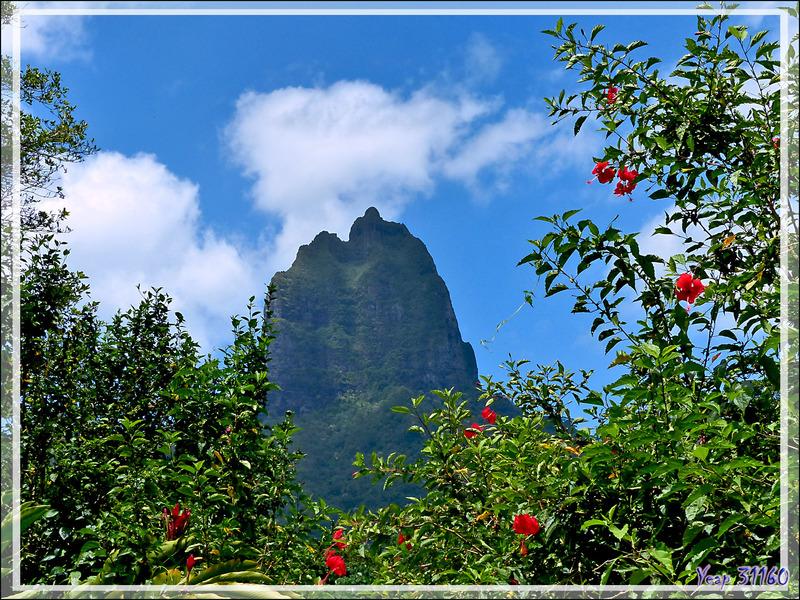 Le Mou'a Roa vu de la Vallée d'Opunohu - Moorea - Polynésie française