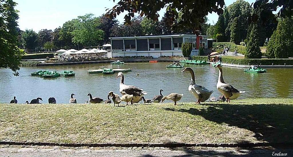 PROMENADES AU PARC  BARBIEUX  EN TOUTES SAISONS - 3 - Autres lieux et Activités du Parc