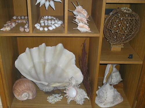 Musée Saint-Roch-Issoudun-Les arts océaniens