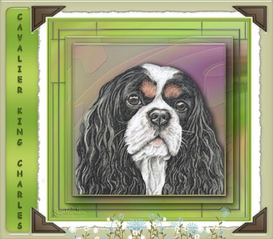 Portrait : Cavalier King Charles