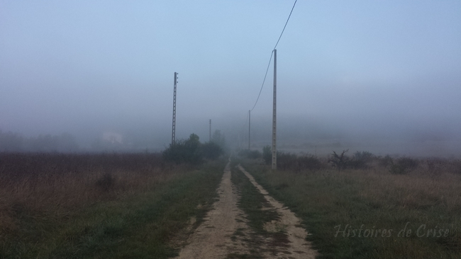 Photographie de brouillard en champ