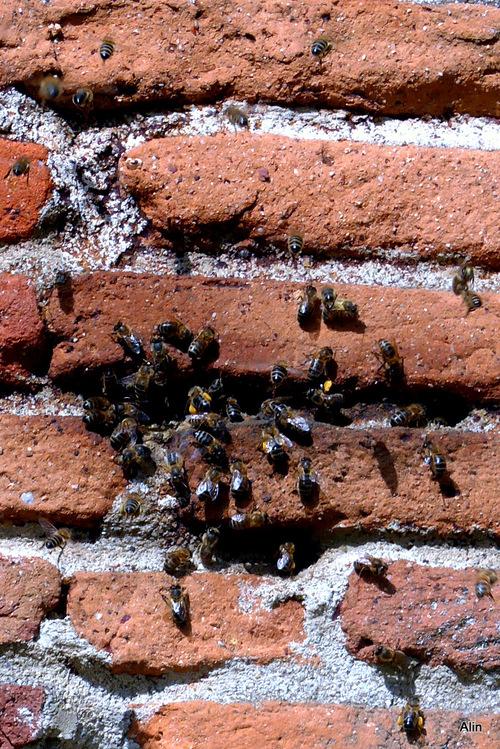 Les murs et les abeilles