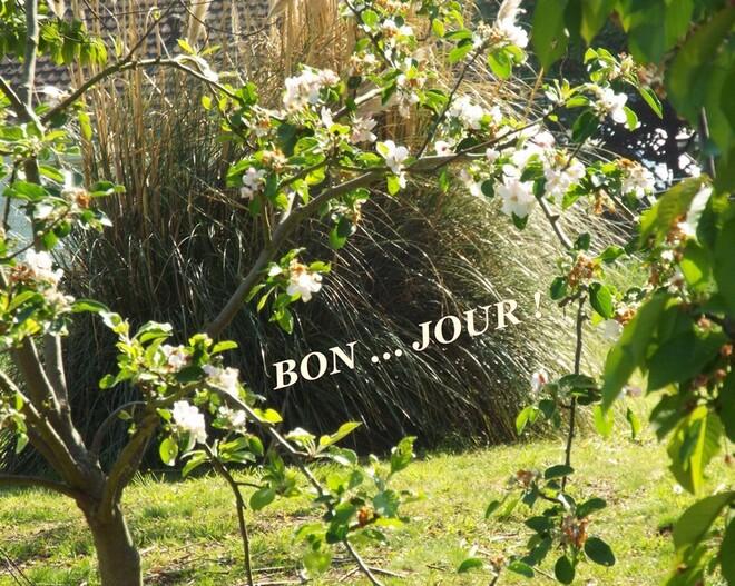 """Tendance blanche"" ... au jardin ..."