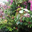 Dans mon jardin (1) - Photo :  Bobnad