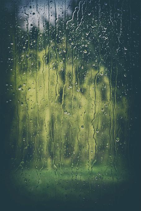 Sous le vent danse le saule pleureur...
