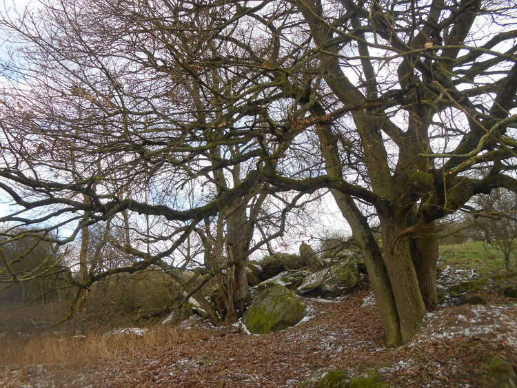 The Celtic winter