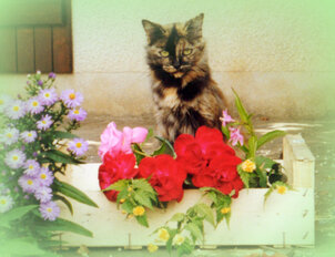 La rose et le chat
