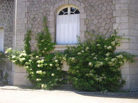 chateau_du_bois_rouaud_