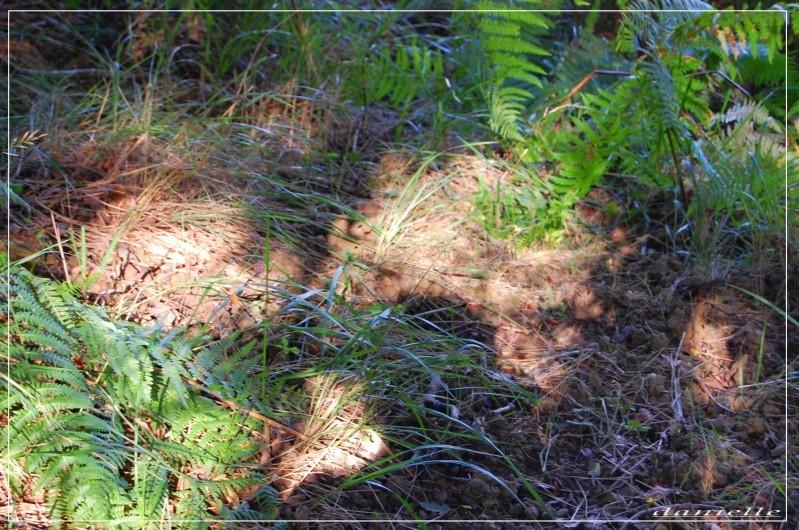 mai-2010-0852-copie-1.JPG