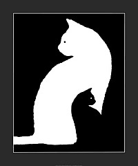 grand-chat-blanc-petit-chat-noir.jpg