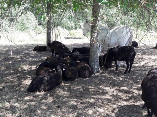 Moutons noirs... suite...