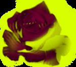 Fleurs - violet et vert - LS