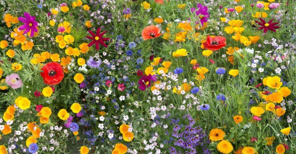 Plantes mellifères pour les abeilles