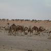 bivouac-1-chameaux-rte-de-l-espoir