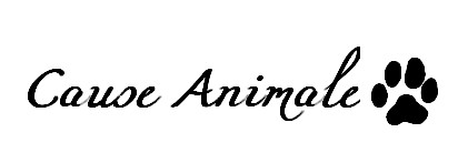 L'abandon d'animaux