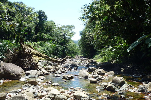 La grande rivière Goyaves Petit Bourg