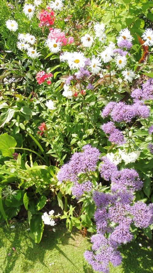 Petit jardin en ville