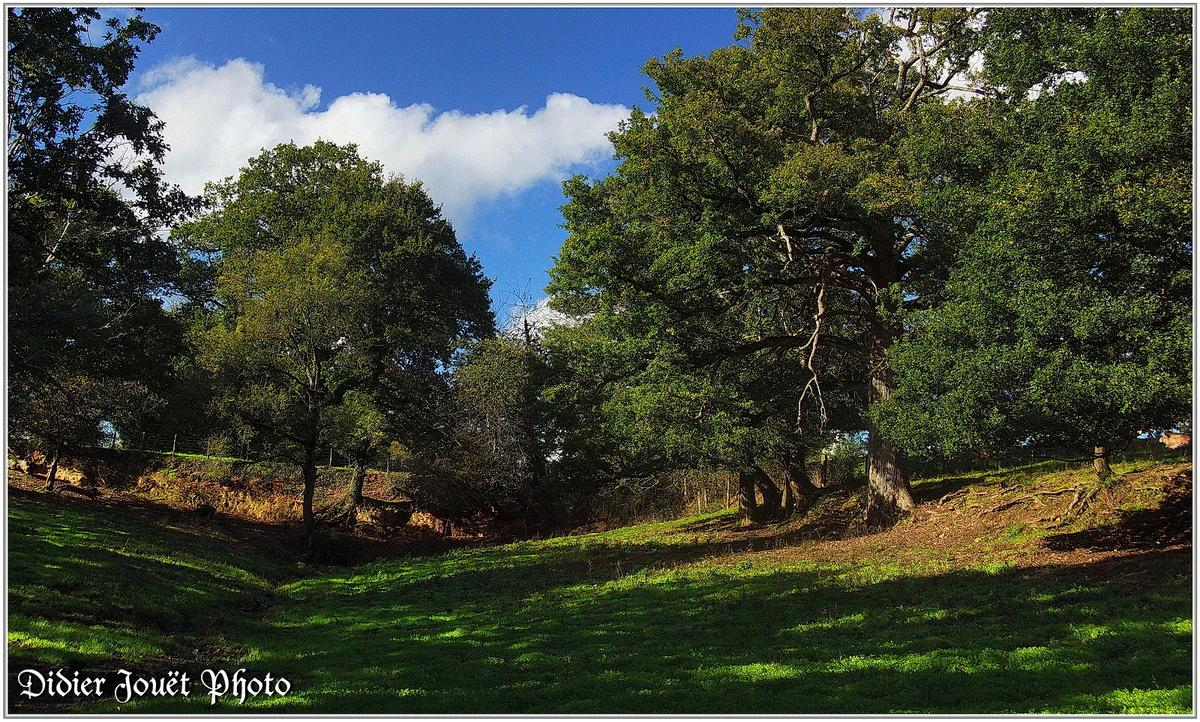 (85) Vendée - La Chaize le Vicomte (14) - Vallée Verte en automne