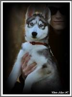 Jasko (3,5 mois)