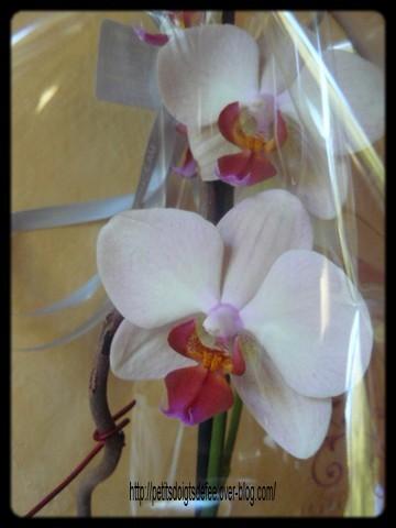 orchidee2.JPG