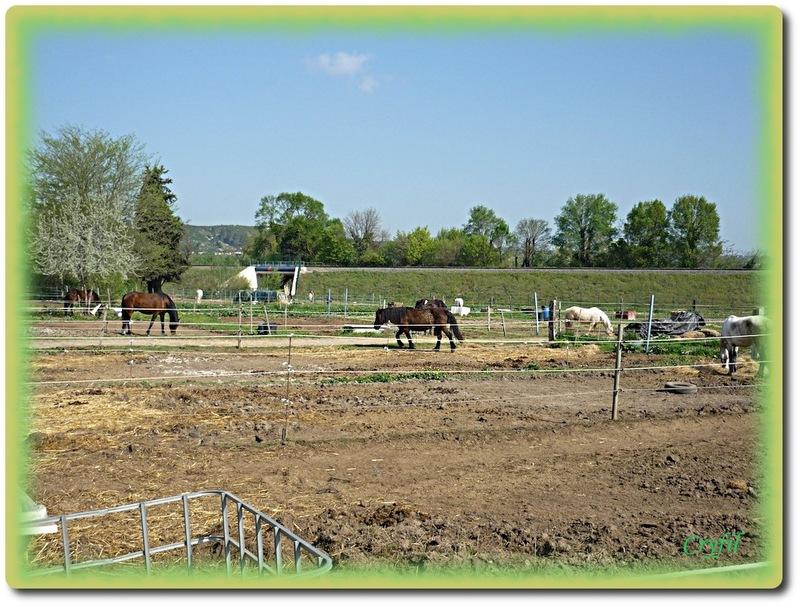Gardanne chevaux