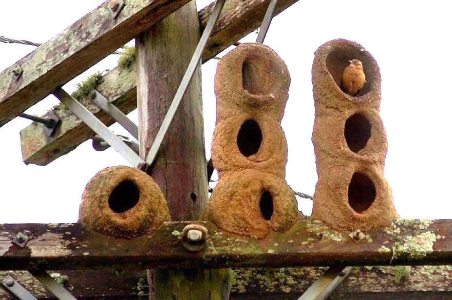 Animaux architectes, habitation des animaux, construction