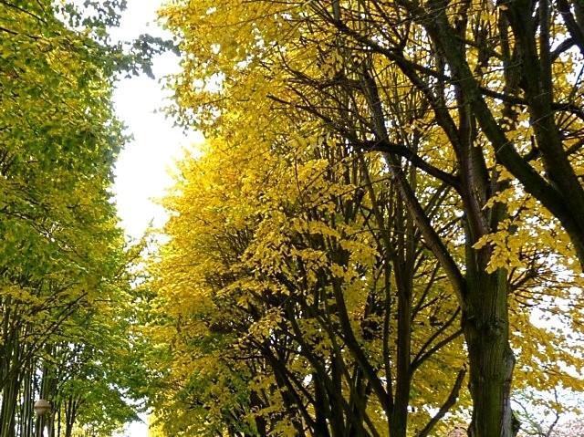 Metz en automne 2 Marc de Metz 2011