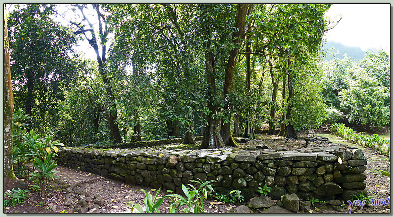 Plateforme du Marae Afareaitu - Moorea - Polynésie française