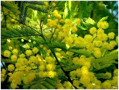 Encore des fleurs...