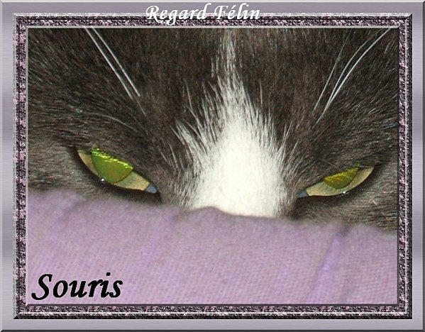 yeux-souris-001----------yeux.jpg