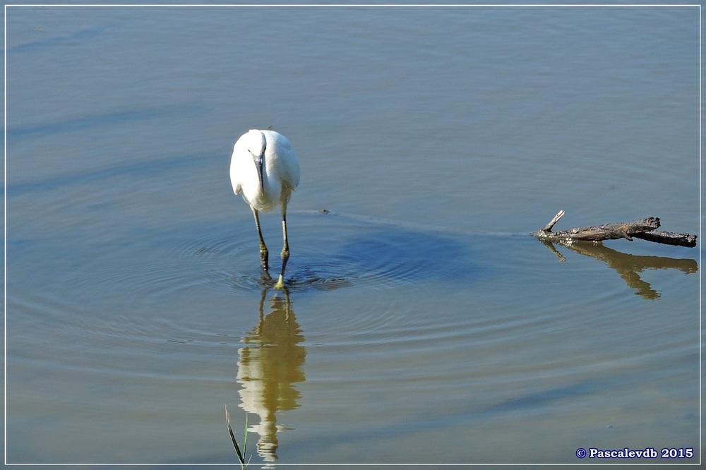 Réserve ornitho du Teich - Mi juillet 2015 - 1/7