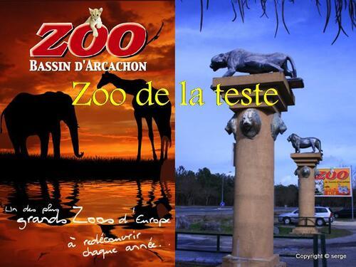 PPS MES CREATIONS Zoo de la teste