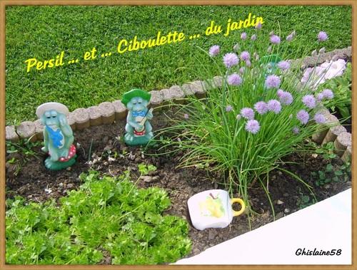 Ciboulette du jardin