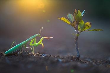 Le monde des insectes ...