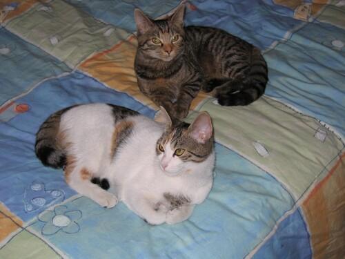 Nous les chats on les aime !