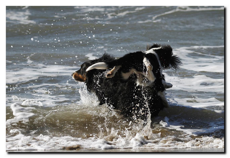 Gampo et Loo en sortie plage